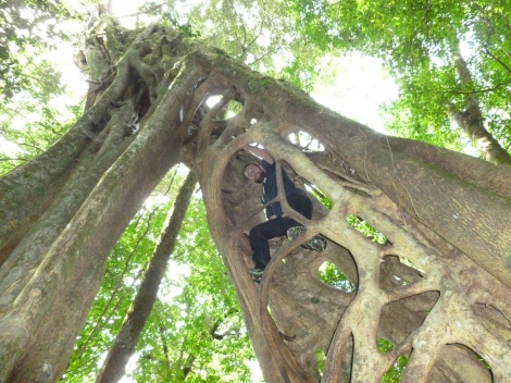 Chris climbing inside a tree
