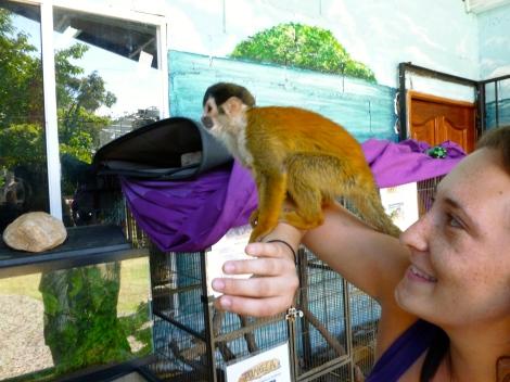 Monkey Monkey Monkey!