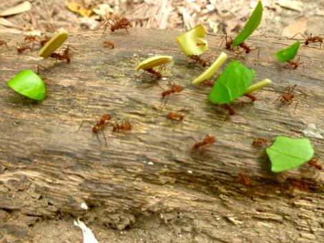 oo0' oo0' oo0' Ants!